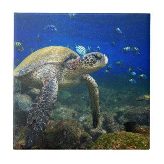 Sea turtle underwater tropical Pacific ocean Ceramic Tiles