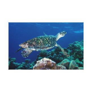Sea Turtle Wrapped Canvas