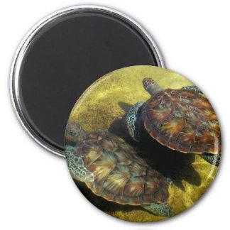Sea Turtles 2 Inch Round Magnet