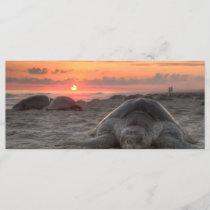 Sea Turtles at Sunset