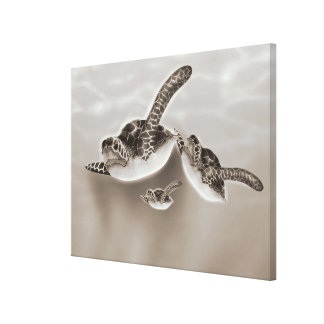 Sea Turtles Illustration Canvas Print