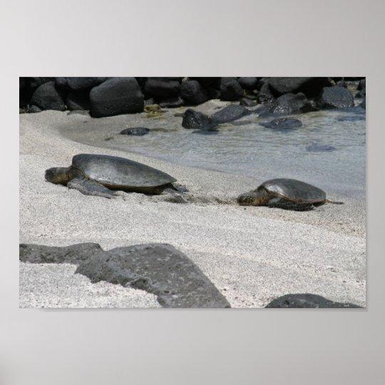 Sea Turtles in Kona, Hawaii Poster