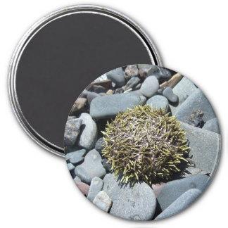 Sea Urchin 1 Magnet
