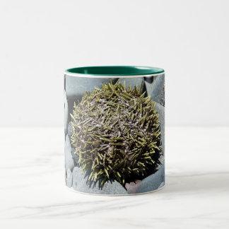 Sea Urchin 1 Mug