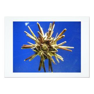 Sea Urchin Card