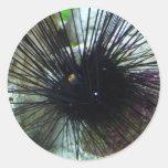 sea urchin classic round sticker