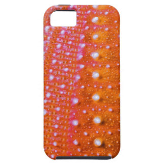 Sea Urchin-Coral iPhone 5 Cover