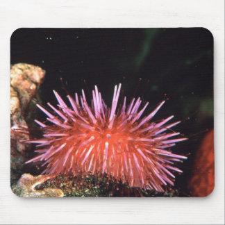 Sea Urchin Mouse Pad
