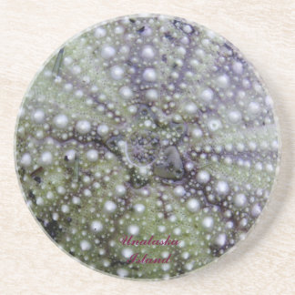 Sea Urchin Seashell Drink Coaster