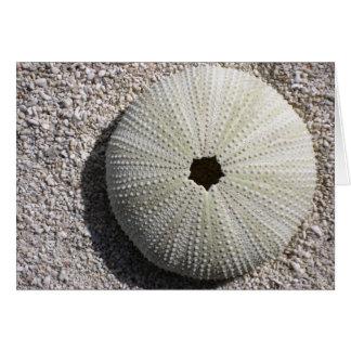 Sea Urchin Shell on Sand Card