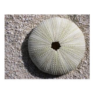 Sea Urchin Shell on the Sand Postcard