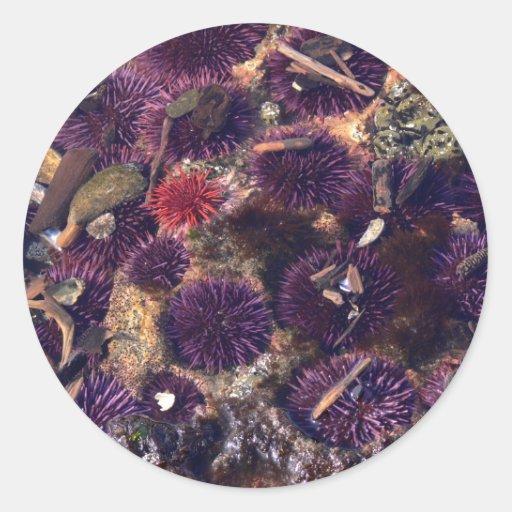 Sea Urchins Classic Round Sticker