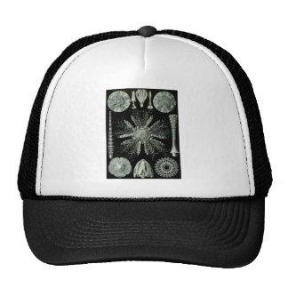 Sea Urchins Trucker Hat