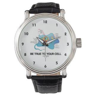 Sea verdad a su eucariota de la célula (uno mismo) reloj