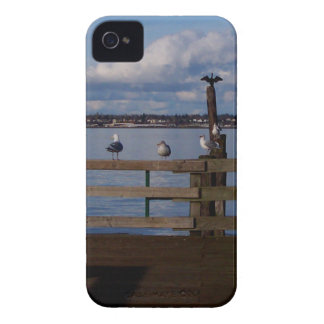Seabird Convention Blackberry Bold Covers