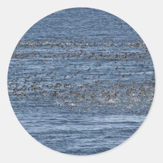 Seabird flock near Kasatochi Island Classic Round Sticker