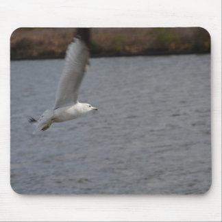 Seabird Gliding Along Mouse Pad