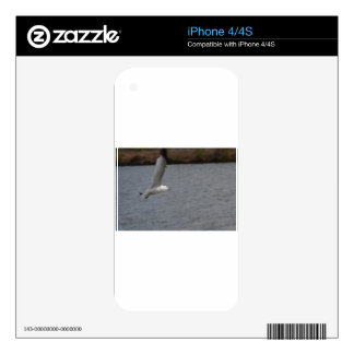 Seabird Gliding Along Skins For iPhone 4