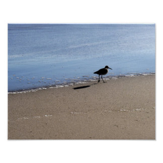 Seabird on the Beach Poster