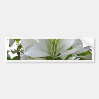 Seafarer resort, Key Largo flora Bumper Sticker