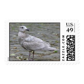 seagal on pavement postage stamp