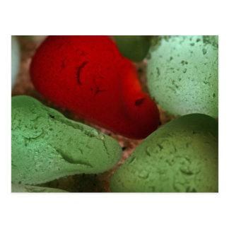 Seaglass rojo y verde postal