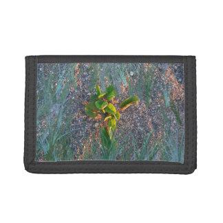 seagrape con la capa de la hierba