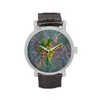 seagrape con la capa de la hierba reloj