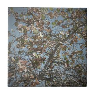 Seagrape plant, pinhole camera style, blue sky tile