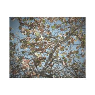 Seagrape plant, pinhole camera style, blue sky canvas print