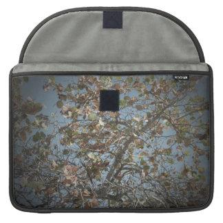 Seagrape plant, pinhole camera style, blue sky sleeves for MacBooks