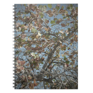 Seagrape plant, pinhole camera style, blue sky note book