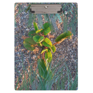 seagrape with grass overlay clipboard