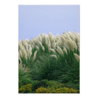 SeaGrass Breeze Posters