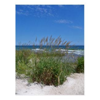 Seagrass Postcard