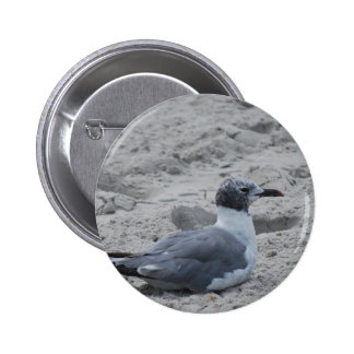 seagul pinback buttons