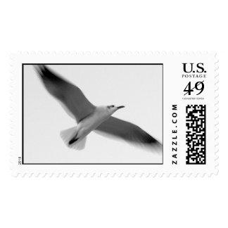 seagul II Stamps