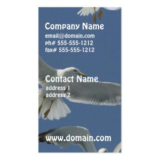 seagull-11.jpg plantilla de tarjeta personal