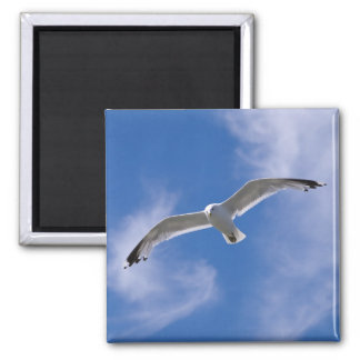 Seagull 2 Inch Square Magnet