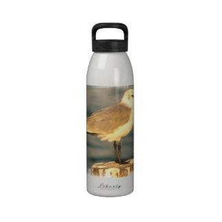 seagull-3.jpg drinking bottle