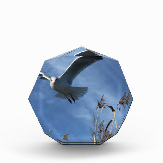 seagull acrylic award