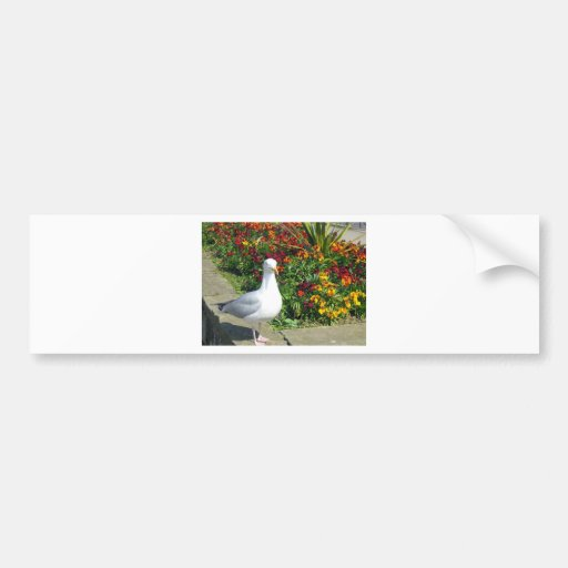 Seagull And Flowers In Whitby Car Bumper Sticker