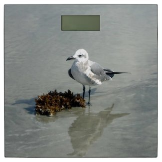 Seagull and Seaweed on Beach