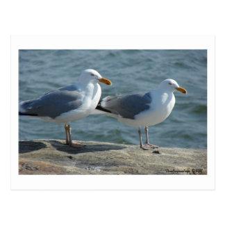 Seagull at Barnegat Inlet Postcard