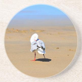 SEAGULL AT BEACH IN QUEENSLAND AUSTRALIA SANDSTONE COASTER