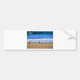SEAGULL AT BEACH QUEENSLAND AUSTRALIA CAR BUMPER STICKER
