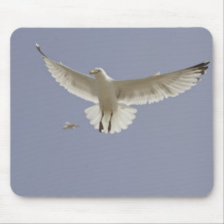 Seagull at full stretch mouse pad