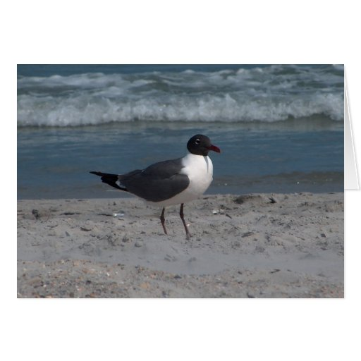 Seagull at the Beach Card