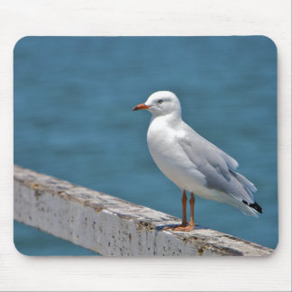 Seagull at the beach mouse pad