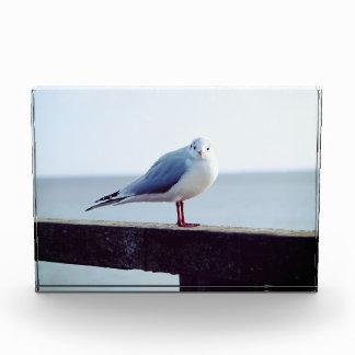 seagull award